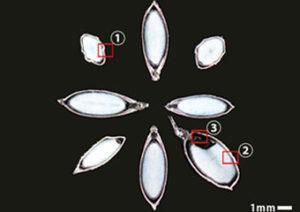 種もみ写真7